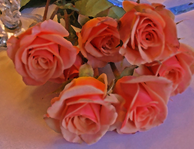 Perfect Apricot Roses