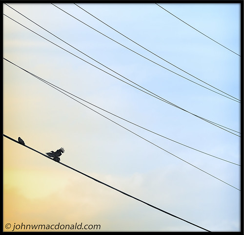 Wires   by johnwmacdonald