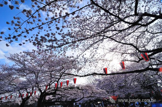 東京櫻花祭_上野公園_0364a