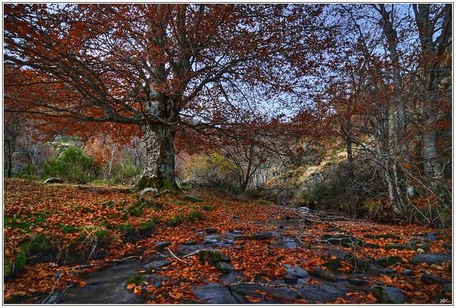 Parque Natural del Hayedo de la Tejera Negra (Guadalajara - Spain)