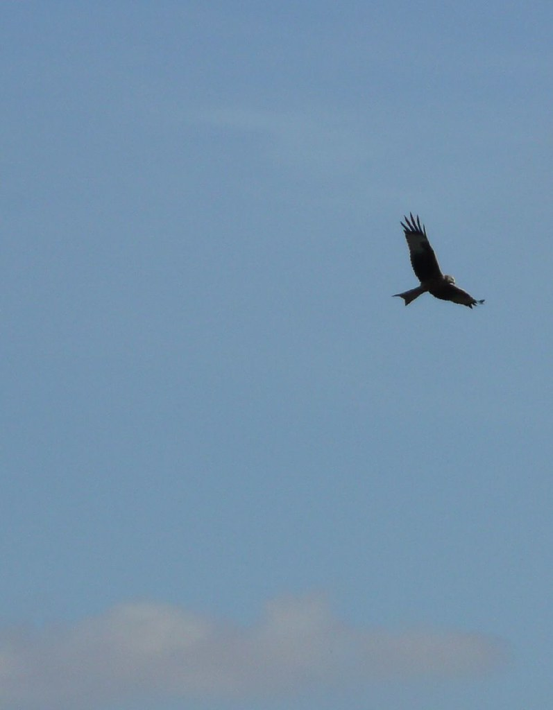 Book 1, Walk 9, Shiplake to Henley Kite, near Cowfields Farm, 20 October '07.