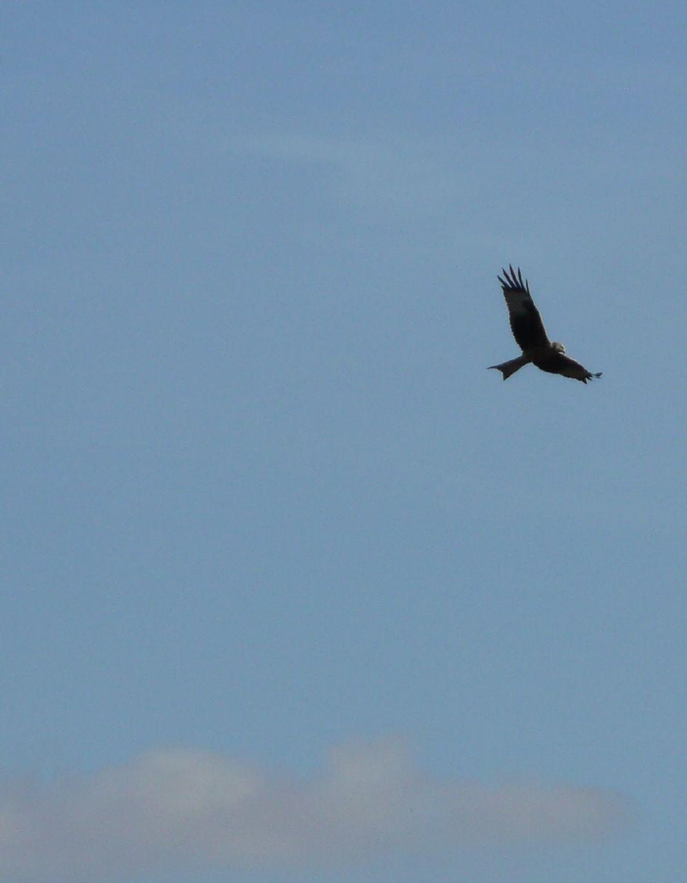 Book 1, Walk 9, Shiplake to Henley Kite, near Cowfields Farm, 20 October '07.