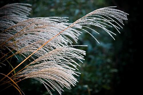 green fall grass silver abigfave