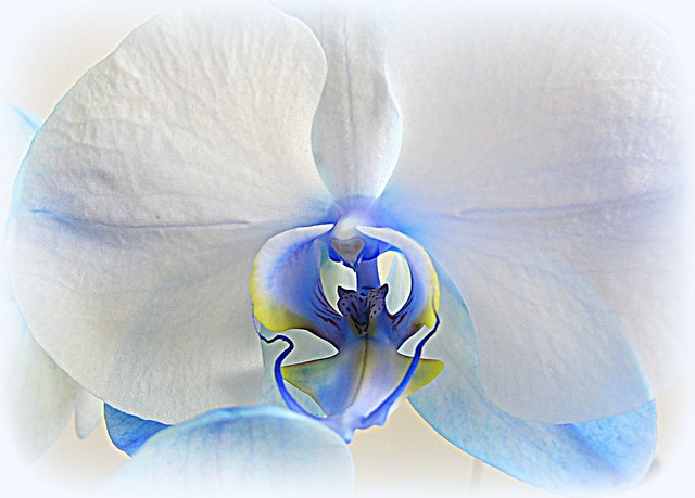 Orchid / Explored