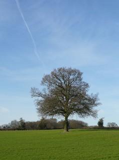 Book 2, Walk 4, Chesham to Great Missenden Blue sky tree, 9 Feb '08
