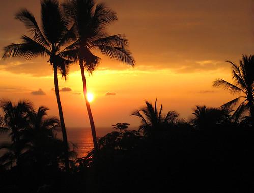 ocean sunset sky dark hawaii dusk silhouettes palmtrees hawaiiansunset kona kailuakona universityofthenations sooc naturessilhouettes