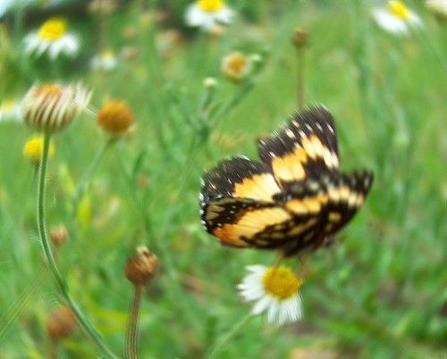 flowers camp motion blur nature daisies butterfly wildlife spin flight insects daisy wildflowers dizzy