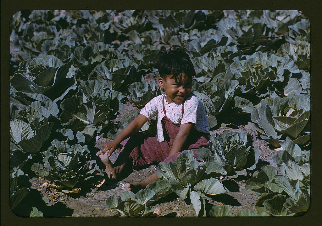 Child of a migratory farm laborer in the field during the harvest of the community center's cabbage crop, FSA labor camp, Tex.  (LOC)