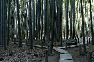 Hokokuji bamboo forest | by KimonBerlin