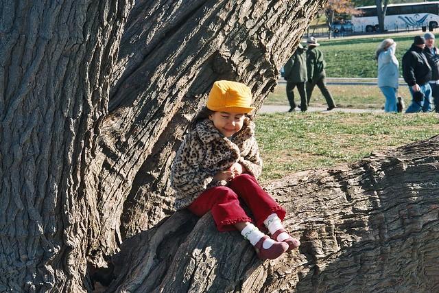 Mall Tree I