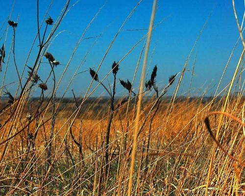 nebraska grasses prairie 1976 1776 nativegrasses flowrbx notever bicentennialprairiemarker neverbeenplowed