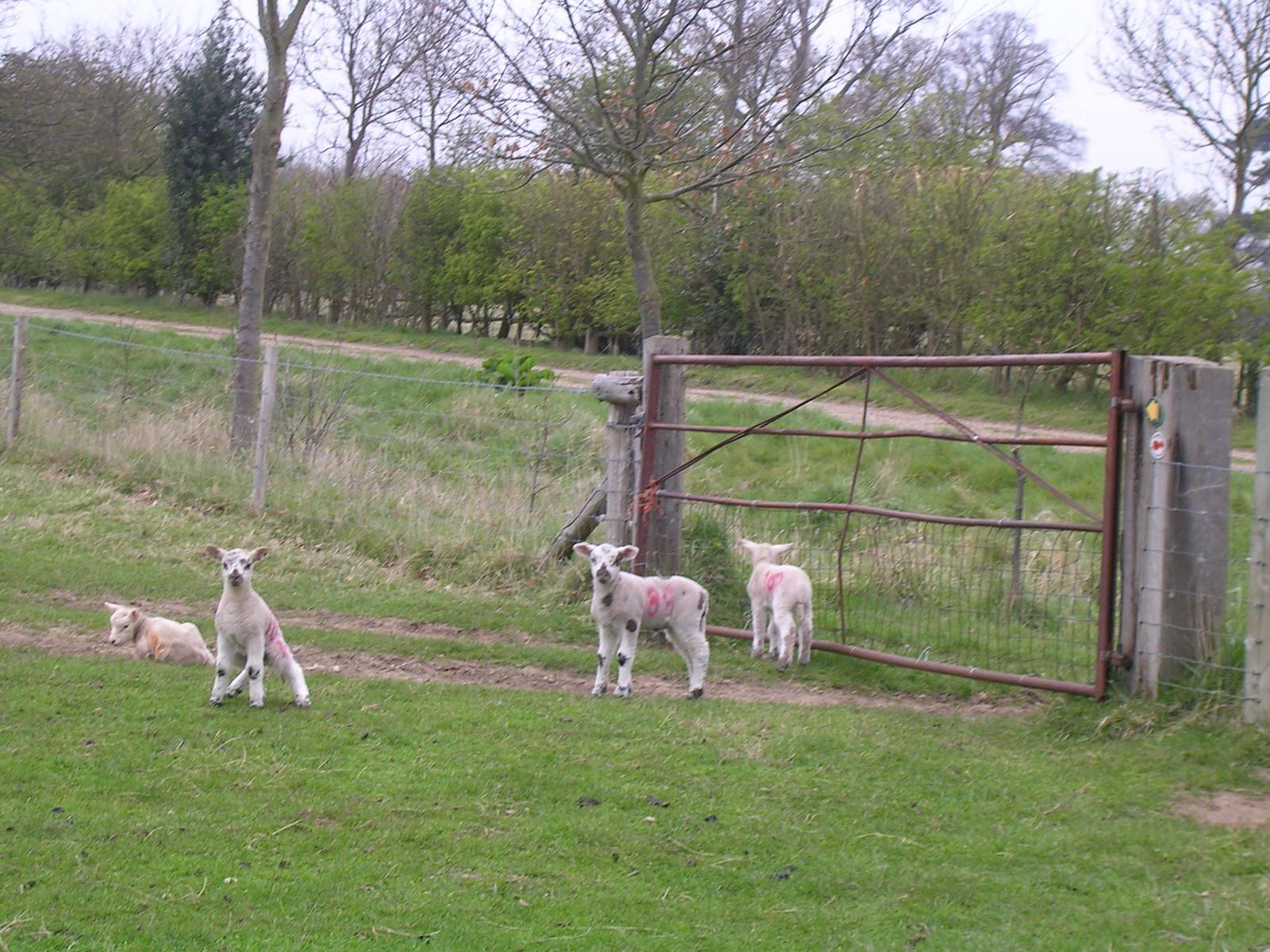 Lambs Manningtree circular.