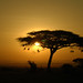 Safari Sunsets