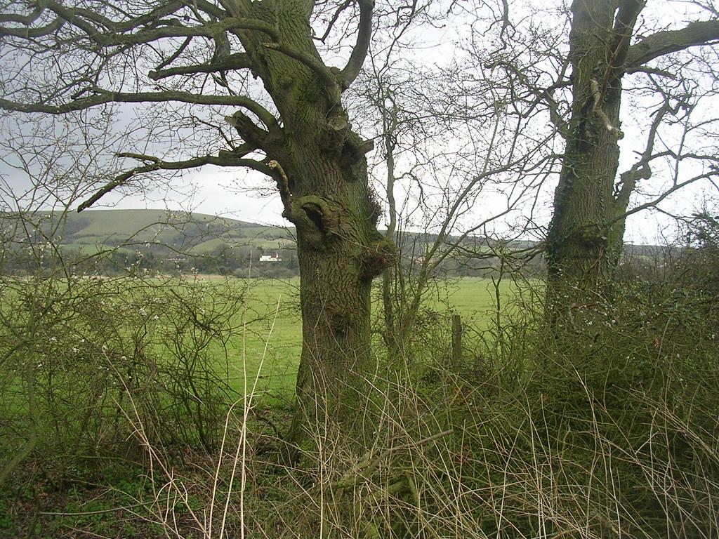 Trees and downs Pulborough Circular