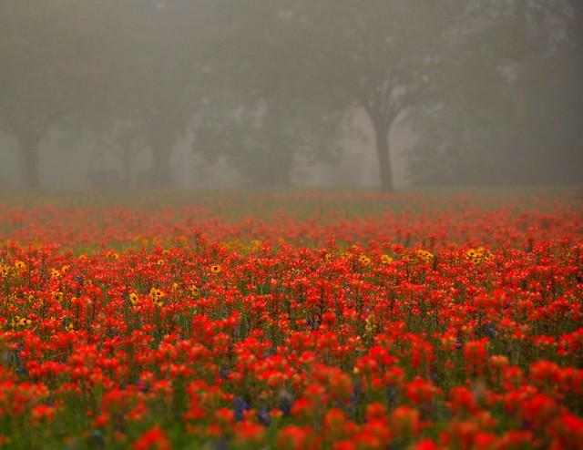 Super Red Wildflowers