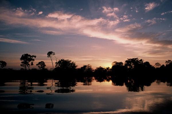"""Still Pink"", The Pantanal, Brazil"