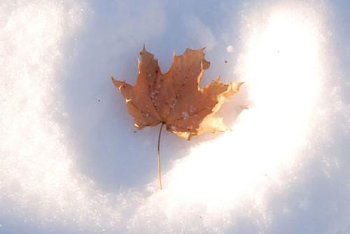 winter walk.2 | by SouleMama