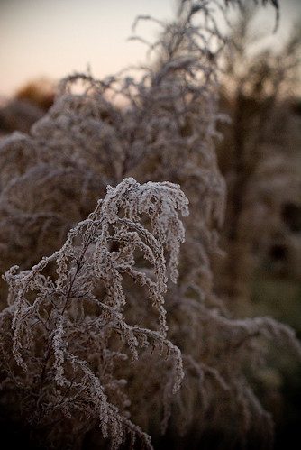 Morning Frost | by srsphoto
