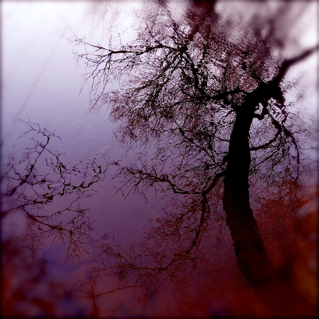 Dialogue Between Two Trees In My Wild River…!!! | My Wild Ri