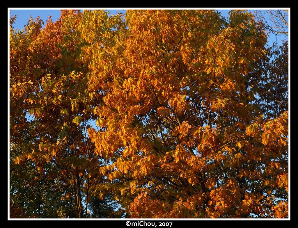 Autumn colors by m!Chou