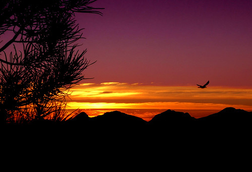 arizona sky mountains bird nature sunrise landscape outdoors flickrchallengegroup flickrchallengewinner anotherchallengegroup acg1stplacewinner