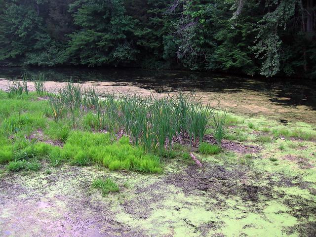 Evins Mill, swamp, DeKalb Co, TN