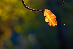 ¿es otoño? | by Tivitoh