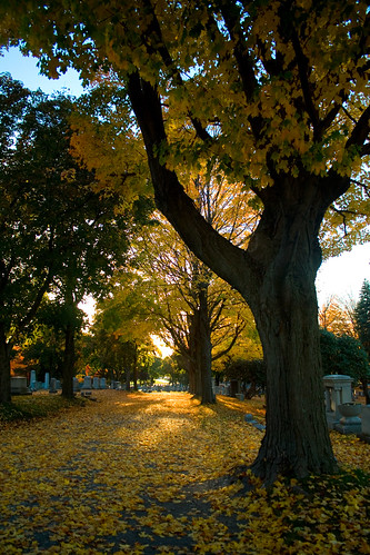 autumn sunset fall graveyard raw cemetary today worcesterma 0335 hopecemetary
