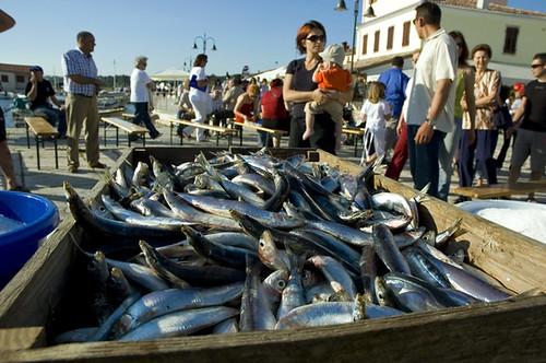 Fazana fresh sardines | by DoctorDave