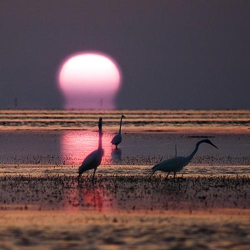 ocean pink sunset sea bird heron nature beauty birds silhouette waves purple natural florida crane horizon beak silhouettes cranes trinity nautre herons oceano settingsun tropica pinksun sunsettrinity