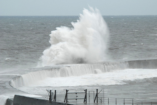 Harbour Wave