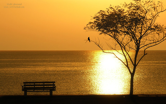 Lonely in golden place!