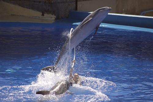 Acrobacia Delfin