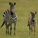 Serengeti and Masai Mara