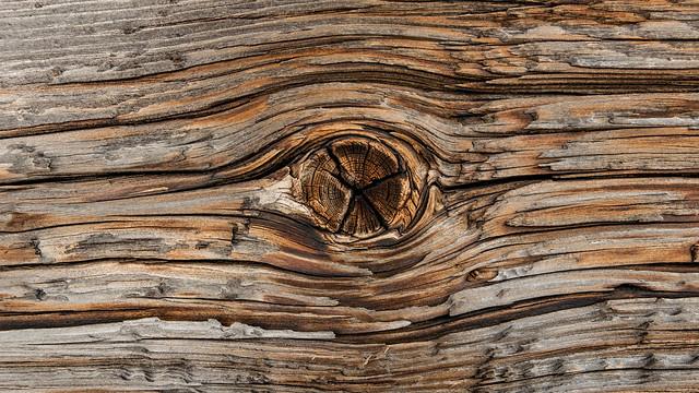 Wooden eye - L1030795