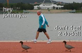ducks backlash