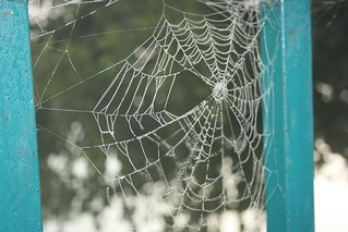 Wet Spider Web | by Swami Stream