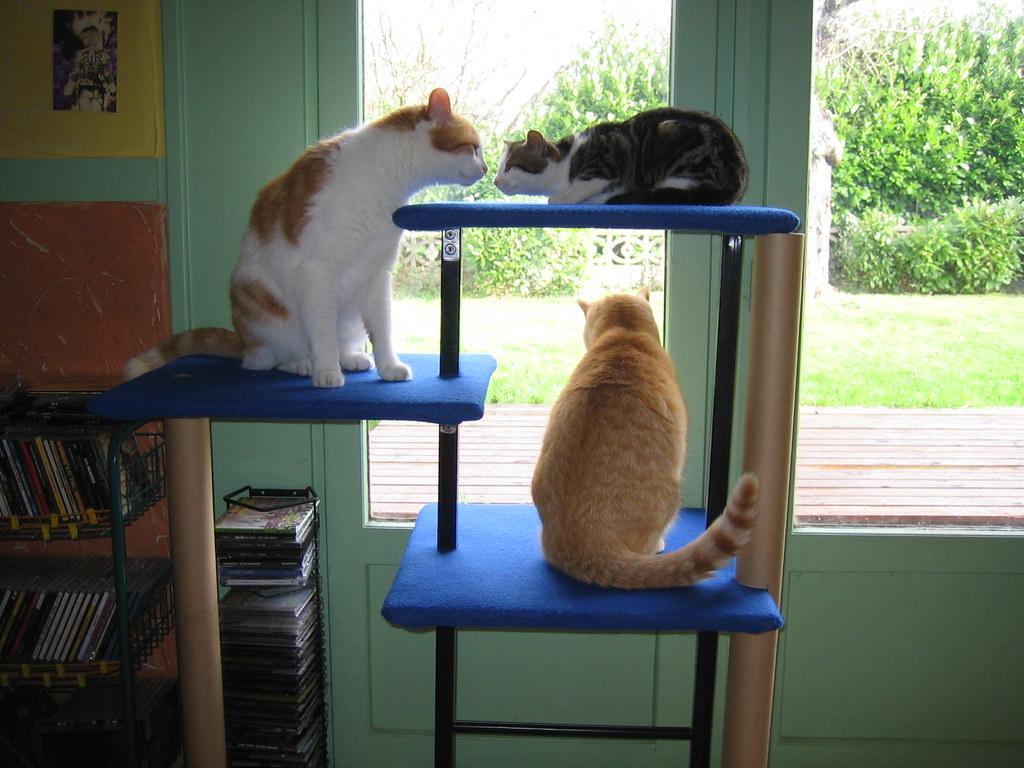 Arbre A Chat A Faire Maison arbre à chat fait maison | notre dernière création : l'arbre