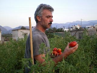 Harvest time, organic garden, Crete, Greece