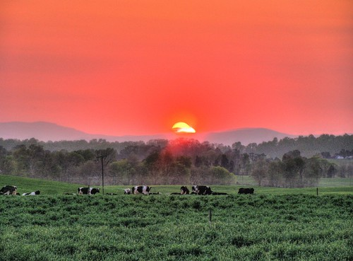 sunset usa sun mountains animal rural mammal virginia cow unitedstates cows farm south scenic northamerica redsky bovidae piedmont blueridgemountains hdr grazing animalia mammalia southernunitedstates chordata artiodactyla scoreme41 brandystation bovid alanthusroad culpepercounty crystallineapplachians