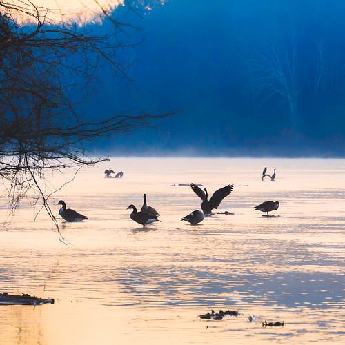 atl atlanta chattahoochee cochranshoals localparks nps parks birds geese goose loon duck fowl sunrise morning