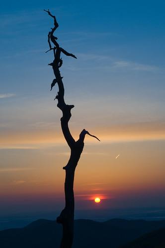 morning trees sky sun mountains silhouette skyline forest sunrise virginia silhouettes valley shenandoah piedmont skylinedrive d300 shenandoahnationalpark snp thorofare golddragon diamondclassphotographer flickrdiamond theunforgettablepictures thorofareoverlook