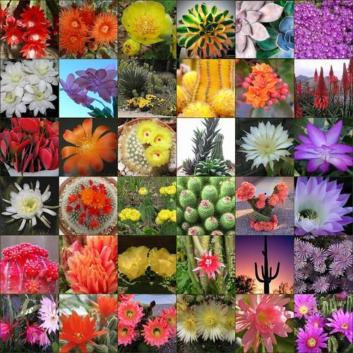 Colorful Cacti & Cactus Flower Mosaic