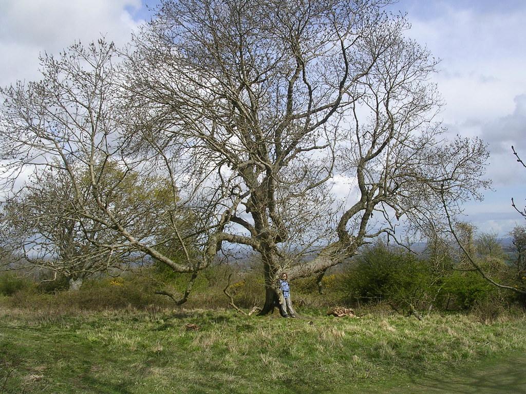 Big Tree Hassocks to Lewes