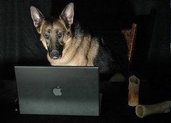 Animal Portrait Photography German Shepherd Dog on Computer - Burning the Midnight Oil with a Mac.  A MacDog. | by WB - CMH
