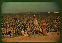 Day laborers picking cotton near Clarksdale, Miss. Delta  (LOC) | by The Library of Congress