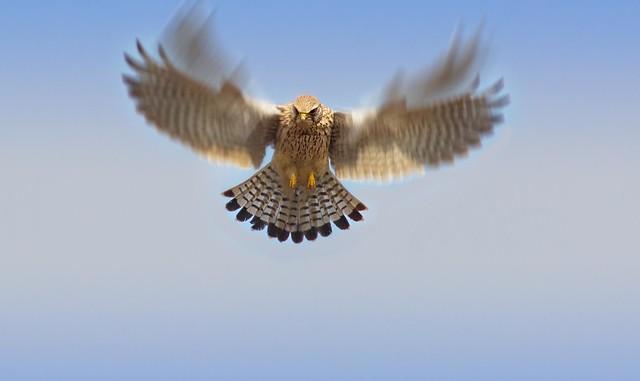 Stationary flight