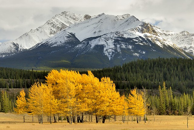 Canada, autumn trees