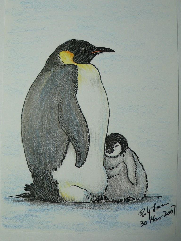Emperor penguin color pencil drawing poyee lam0321 flickr
