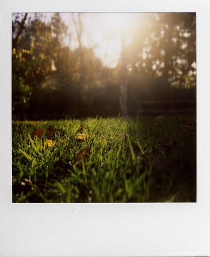 sunset green nature grass polaroid 600 slr680 680 winterinla